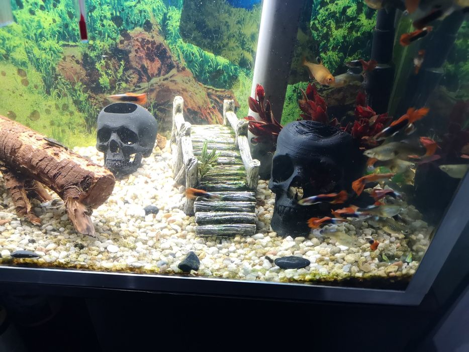 Caveira para aquario - 12cm 8€ - 6cm 5€